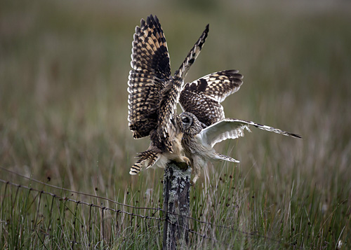 © Marcus Conway - Owl Food Pass