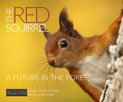 The Red  		Squirrel – A Future in the Forest